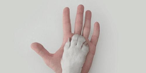 mano e cane