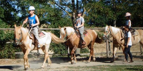 Cavalli - Maneggio