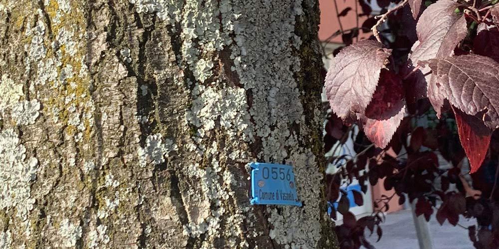 Vasanello censimento verde arboreo